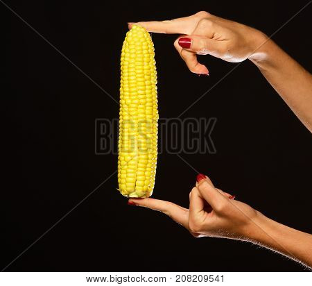Corn Cob In Yellow Color In Fingers. Autumn Maize Harvest