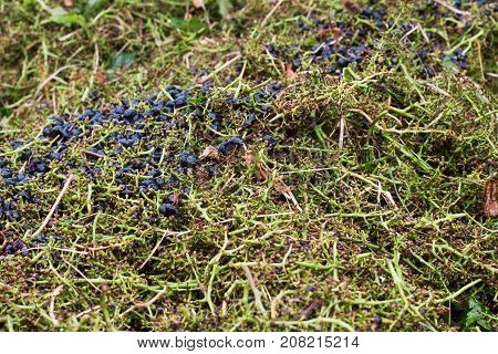 texture of pile of cabernet and merlot green stems