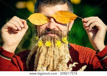 Man With Natural Spikelet Beard Sunny Fall.
