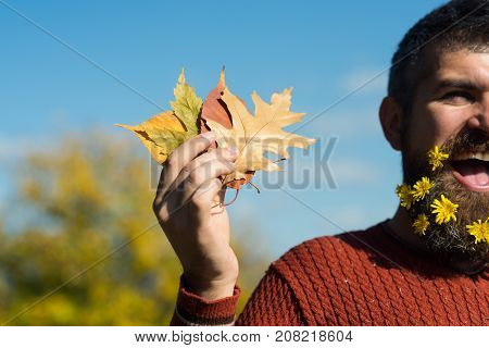 Man With Natural Flower Beard Sunny Fall.