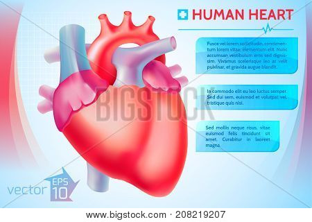 Cardio medical template with text banners and human heart on light background vector illustration