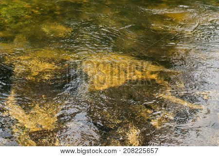 Refraction of light in clear water with small waves