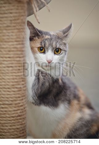 Portrait of the beautiful yellow-eyed cat of a multi-colored color