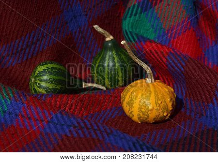 Green Gourds With Orange Warty Ornamental Gourd On Red Plaid