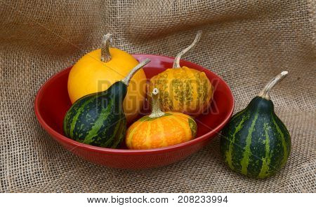 Small Ornamental Gourds In A Red Bowl