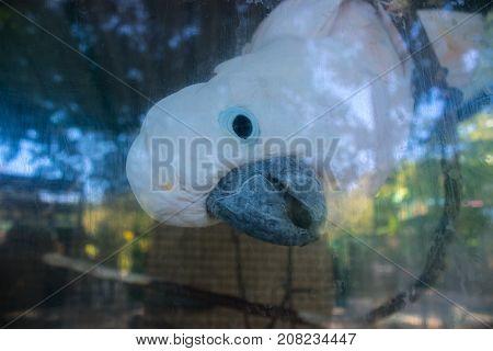 Portrait Of Colorful Parrot