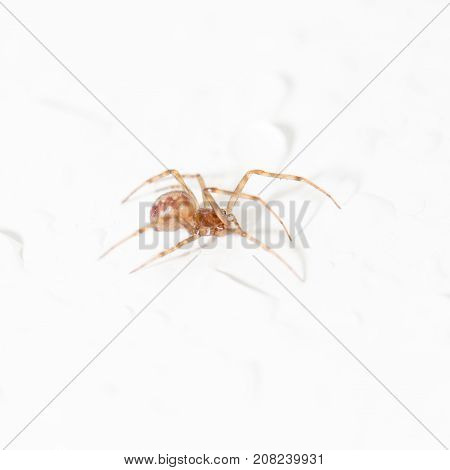spider with water droplets on white. close-up