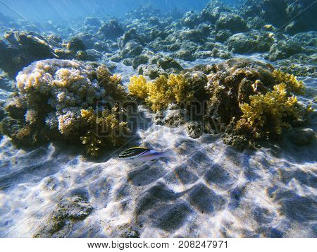 Tropical fish in coral reef. Exotic island shore shallow water. Tropical seashore landscape underwater photo. Coral reef animal. Sea nature. Sea fish in coral. Marine life undersea. Coral landscape