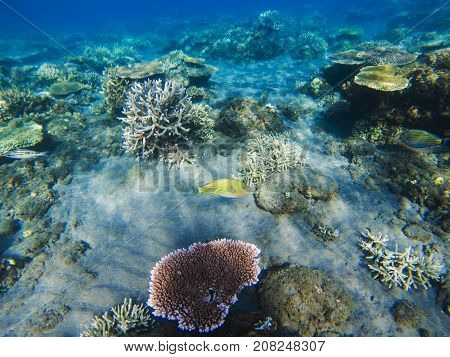 Corals on sand seabottom. Exotic island shore snorkeling. Tropical seashore landscape underwater photo. Coral reef animal. Sea nature. Sea fish in coral. Undersea view of marine life. Coral landscape