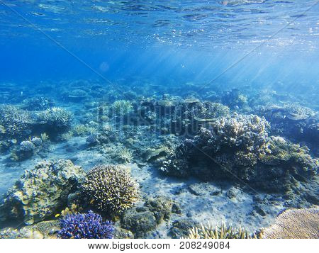 Sunshine on coral reef. Exotic island shore shallow water. Tropical seashore landscape underwater photo. Coral reef animal. Sea nature. Sea fish in coral. Marine life undersea. Coral landscape