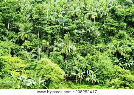 Tropical jungle with palms and trees. Green bush of untouched tropical nature photo background. Fresh green leaf of jungle. Exotic island wild nature. Tropical climate in rain season. Blooming forest