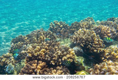 Coral reef and sand seabottom. Tropical seashore inhabitants underwater photo. Coral reef animal. Warm sea nature. Colorful sea fish and corals. Undersea view of marine life. Coral reef landscape