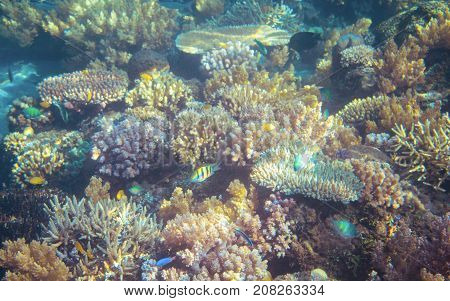 Seascape with coral reef. Tropical seashore inhabitants underwater photo. Coral reef animal. Natural aquarium background. Tropic sea fish and coral. Undersea view of marine life. Coral reef landscape