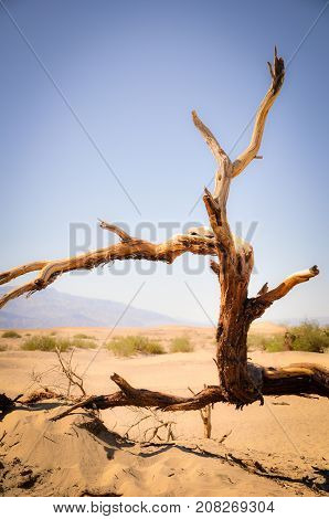 Dead Tree in the Arid Death Valley