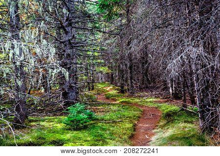 Canada, New Brunswick, Autumn, trails in a national park