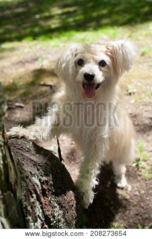 White mixed breed dog in park at summer day