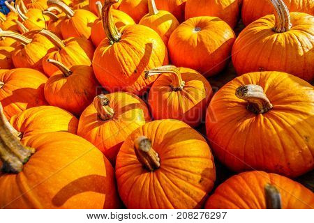 A Truckload of Ripe Pumpkins on a Sunny October Day