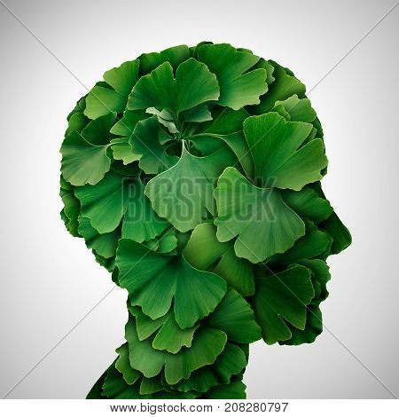 Ginkgo Biloba leaf head as a herbal medicine concept and natural phytotherapy medication symbol for healing as leaves shaped as a human.