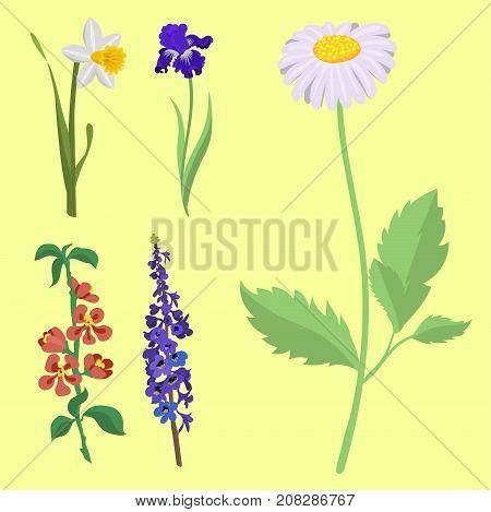 Beautiful spring flower botanical bloom watercolor painting. Summer decoration nature design. Floral drawing leaf blossom vintage vector botanical bouquet.