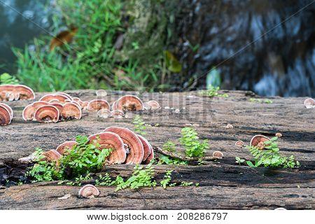 Close Up Shot Of Mushroom On Wood