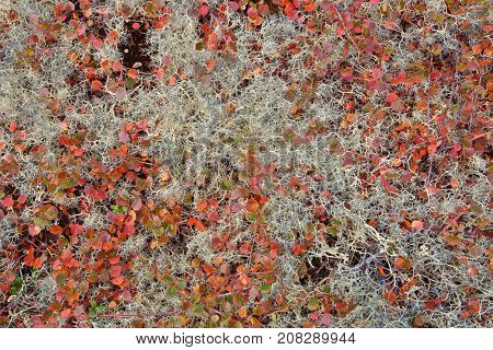 Autumn color palette in the nature – tundra