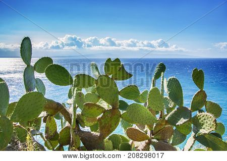 panoramic view of the mediterranean sea with cactus plants from Capo Vaticano, Calabria