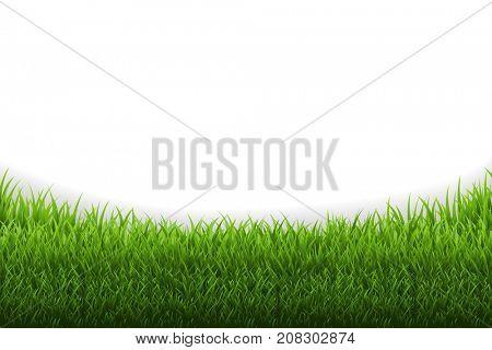 Grass Panorama