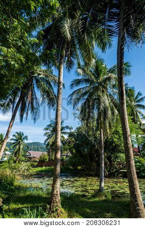 View of palm trees and dense tropical vegetation growing around small pond