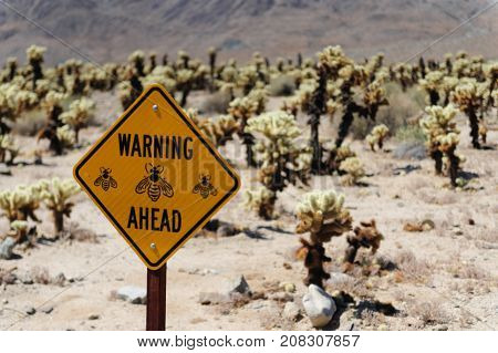 A bee warning sign near the Cholla Cactus Garden in Joshua Tree National Park