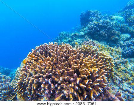 Underwater landscape with coral reef. Coral undersea photo. Seashore texture. Blue sea water wildlife. Deep sea coral ecosystem. Tropical seashore snorkeling. Marine relief landscape. Tropic lagoon