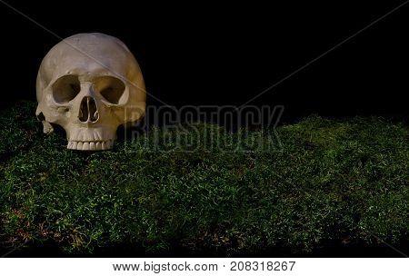 Halloween Scary Human Skull On Green Dark Forest Moss.