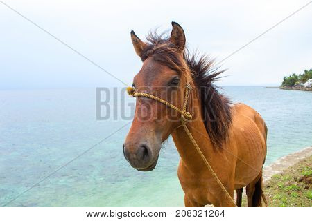 Red horse and blue sea view. Travel photo. Horse head portrait. Lovely farm animal. Cute horse with seascape. Tropical seashore view. Vacation adventure horseriding on beach. Domestic farm animal
