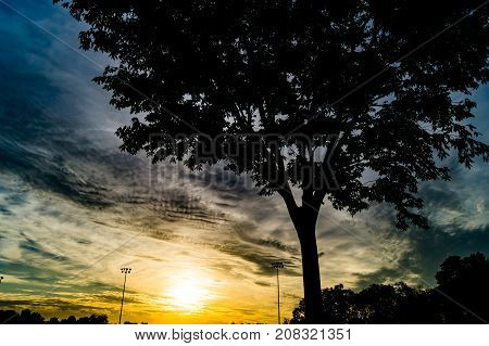 sunset with very contrasting tree in foreground