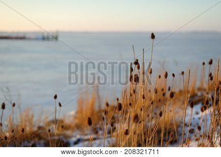 Light yellow grass in front of sea in the sunrise