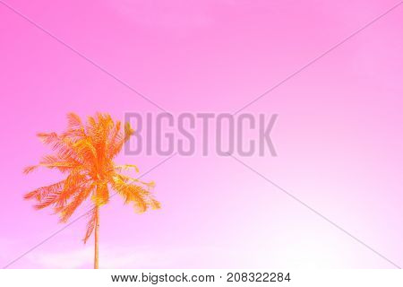 Palm tree on sky pink toned photo. Coco palm tree leaf banner with place for text. Tropical nature travel photo. Palm tree silhouette. Coconut palm poster template. Summer vacation background image