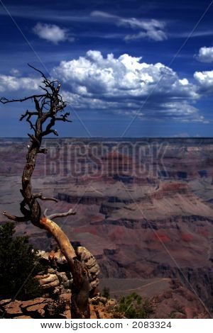 Grand Canyon With Old Tree