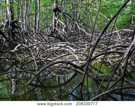 Pacific Mangrove forest in Corcovado National Park - Costa Rica