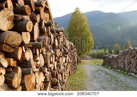 Wooden logs of pine woods in the forest, stacked in a pile. Freshly chopped tree logs stacked up on top of each other in a pile. Stocking of firewood for the winter.
