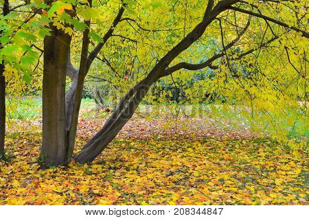 Beautiful trees in the golden autumn park