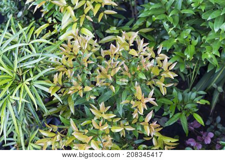 Flowerpot photo background. Tropical foliage plant in exotic garden. White and green leaf of exotic plant. Relaxing view of natural greenery. South Asia tropical garden flora. Natural leaf ornament