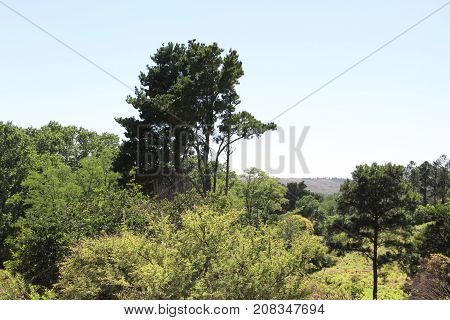 vegetation and sky in the mountains in summer