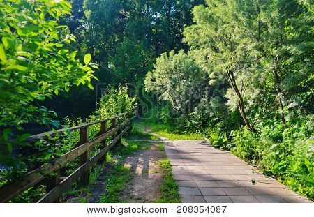 Beautiful view on summer forest with lots of trees and green