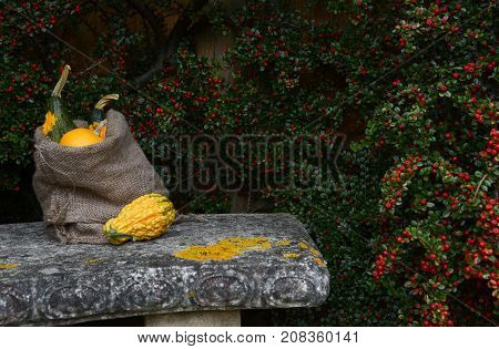 Stone Bench With Jute Sack Full Of Ornamental Gourds