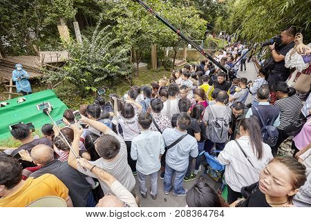 Chengdu, China - September 28, 2017: Journalist And Visitors During Eleven Baby Pandas First Public