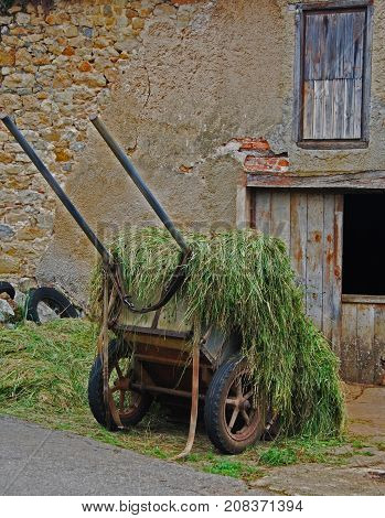 Antique wheelbarrow filled with grass for the cows