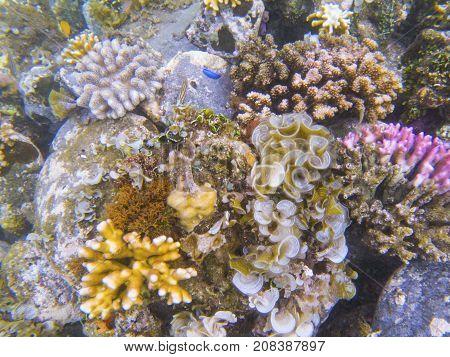 Underwater landscape with tropical fish. Coral undersea photo. Seashore texture. Coral closeup. Sea bottom with coral ecosystem. Tropical seashore snorkeling. Marine relief. Tropic lagoon wildlife