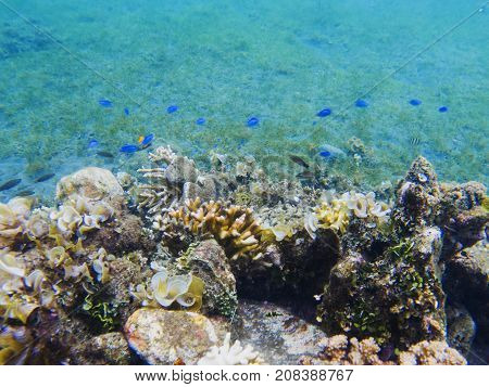Underwater landscape with tropical fish. Coral undersea photo. Seashore texture. Coral closeup. Sea bottom with coral ecosystem. Tropical seashore snorkeling. Marine animals. Tropic lagoon wildlife