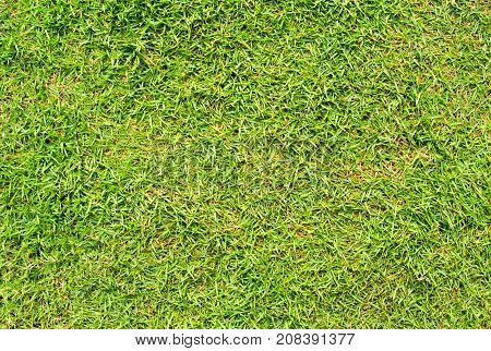 Short cut green grass background. Green grass field photo background. Spring banner of fresh green grass. Grass image for backdrop or seasonal card. Summer land lawn. Playground area for summer sport