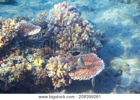 Tropical seashore underwater landscape photo. Sunny coral reef. Coral reef seascape. Snorkeling or diving. Undersea view banner template. Seaside summer vacation activity. Marine aquarium background