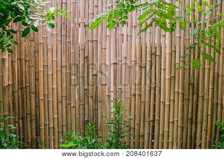 Green leaves with bamboo wall background for garden decoration.